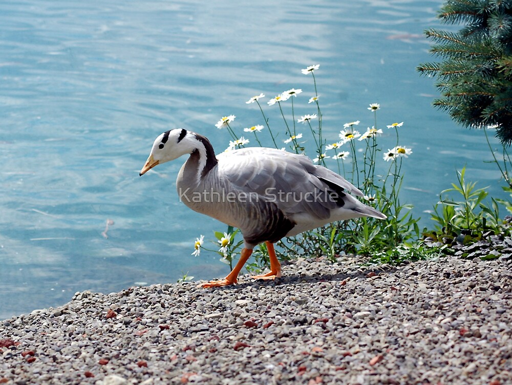Bar Head Goose by Kathleen Struckle
