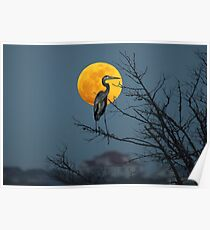 Super Moon and Great Blue Heron Poster