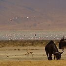 Wildebeest and Flamingos by Robin Hayward