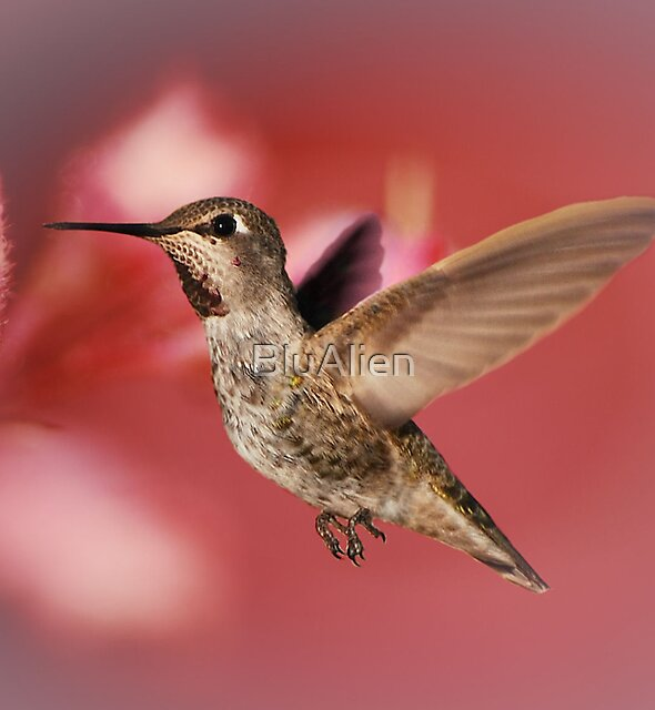 Humming Bird Art by PixelBoxPhoto