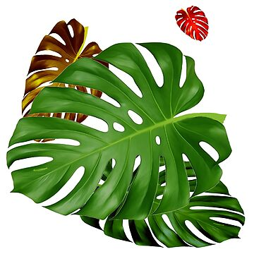 PHILODENDRON #4 by tomb42