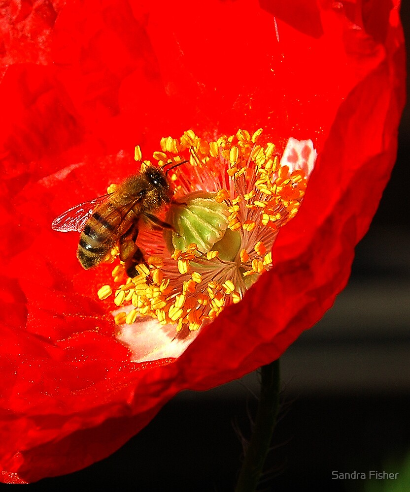 Busy Bee. by S Fisher