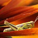 Grasshopper by BigD