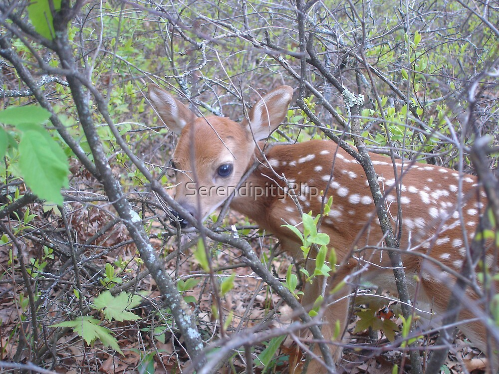 Fawn by Serendipity2lip