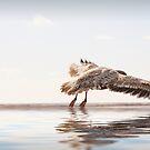 Landing Bird. by Artist Dapixara