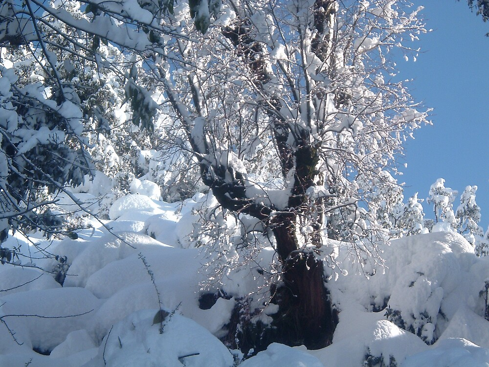 snowy india by pablitoblusher