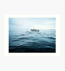 Dolphins in open sea Art Print