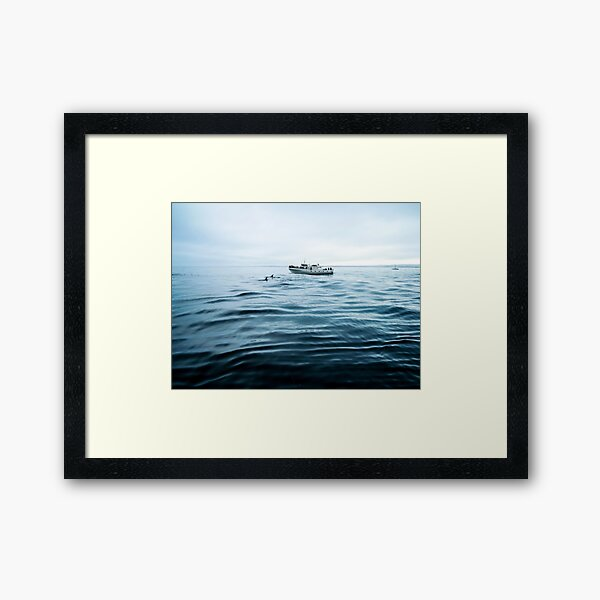 Dolphins in open sea Framed Art Print