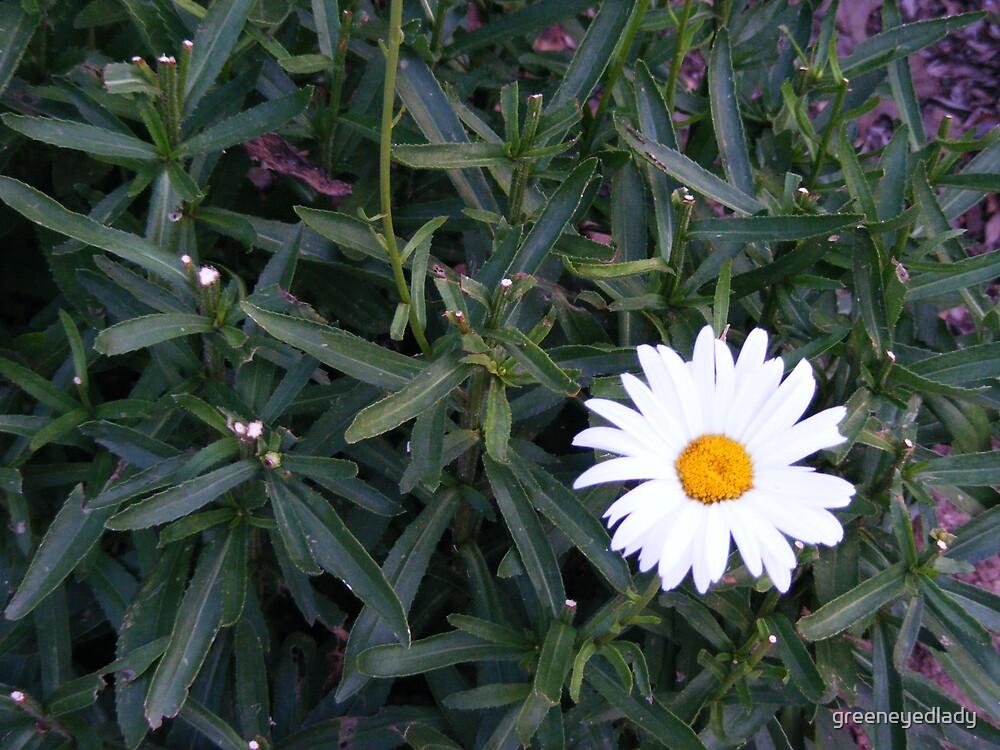 Cheerful Blossom by greeneyedlady