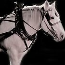 The Working Horse by HeavenOnEarth