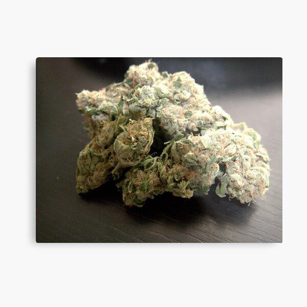 Dank Cookies Buds 420 Cannabis Ganja  Metal Print
