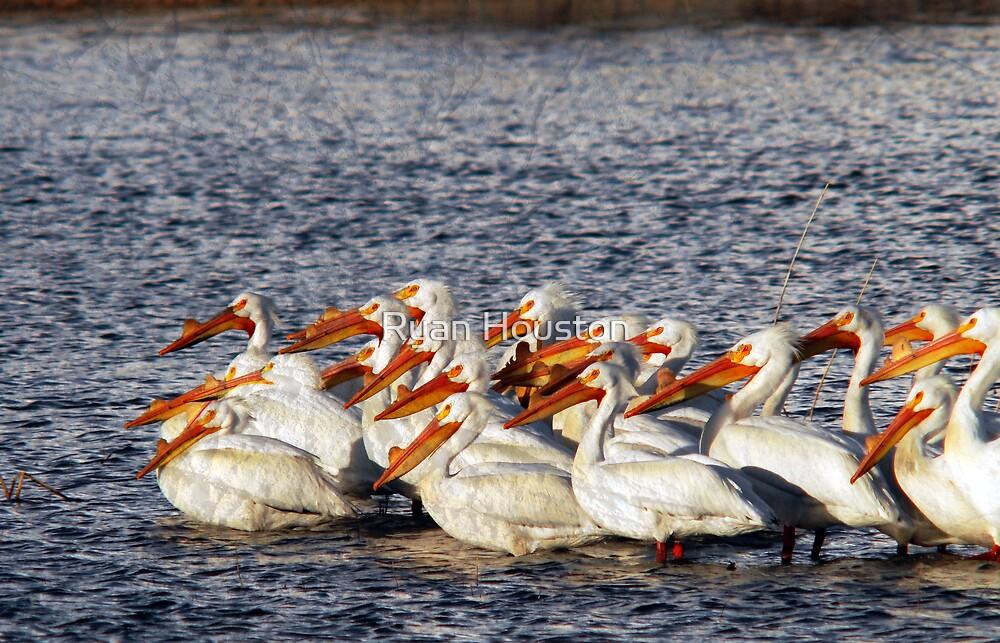 Pelican Bay by Ryan Houston