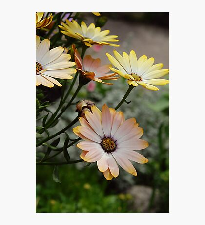 Summer time Flowers Photographic Print