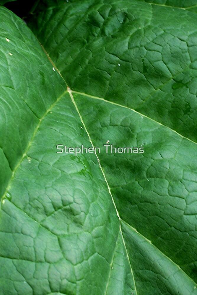 Rhubarb Leaf Macro by Stephen Thomas