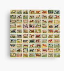 Farmyard Animals set of 75 Canvas Print