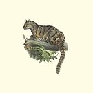 Clouded Leopard - Big Cat Illustration by Hannah Sterry