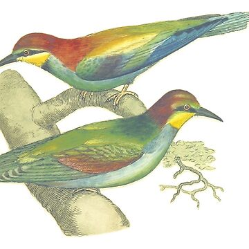 Blue-Throated Bee Eater - Bird Illustration by HannahSterry
