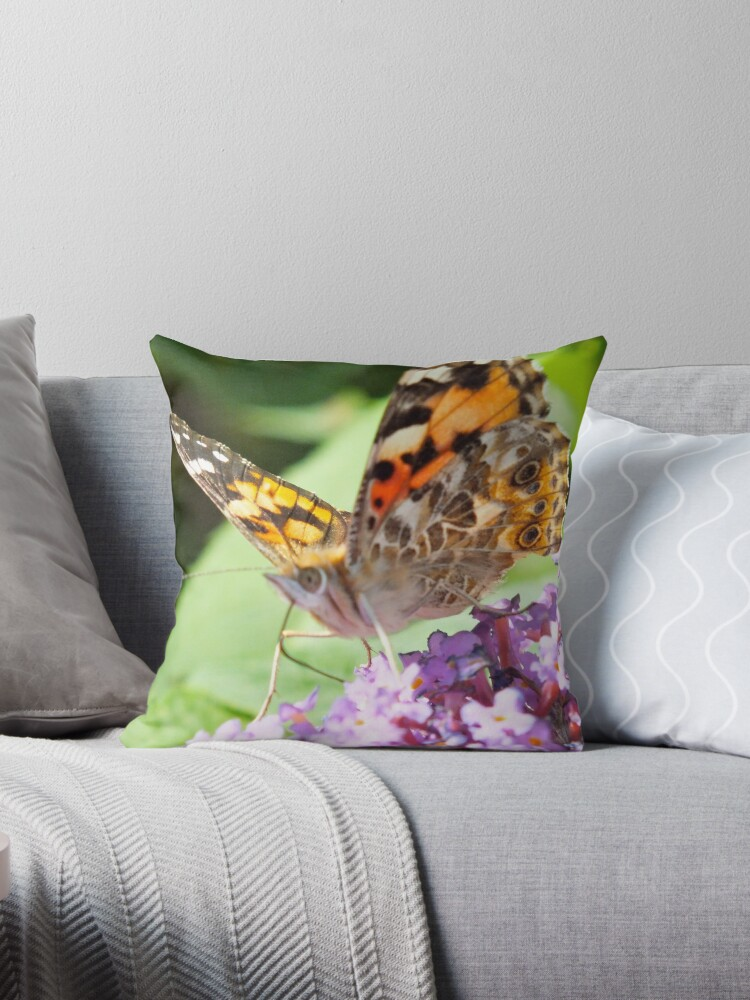 Painted Lady Butterfly by Hannah Sterry