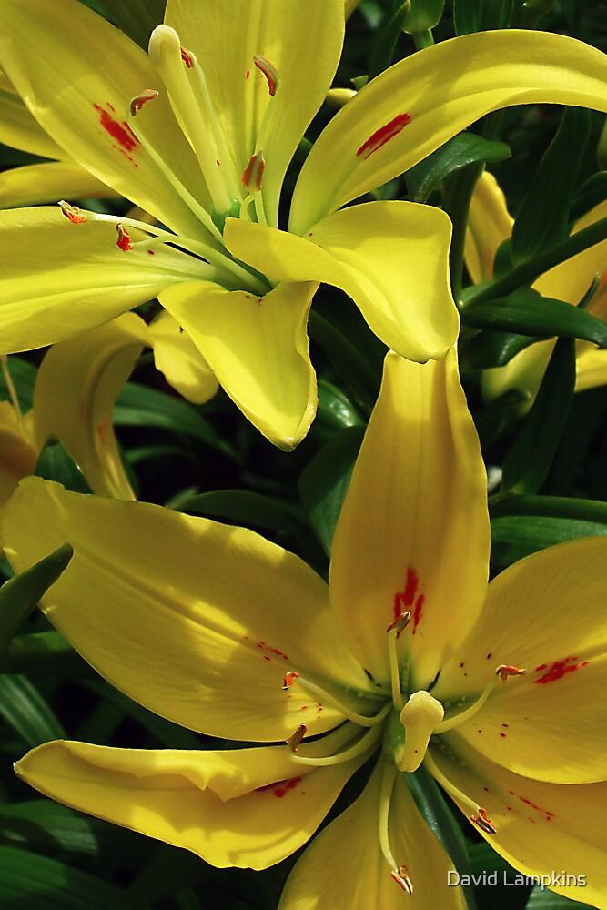 Original Lilies by David Lampkins