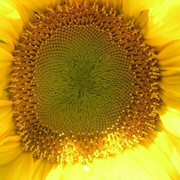 Sunflower Corona by KristenJoy