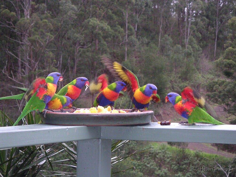 Rainbow Lorikeets Feeding Frenzy by Helen Phillips
