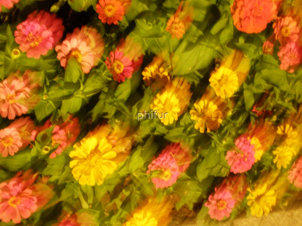 broken flowers by phifur