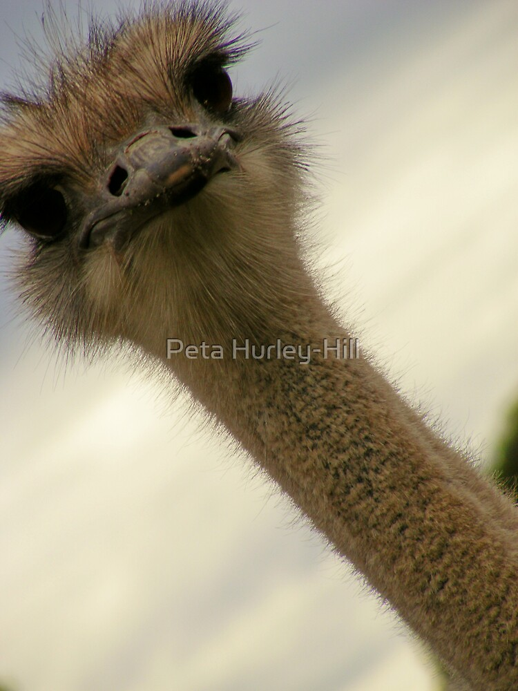 eyeing the camera by Peta Hurley-Hill