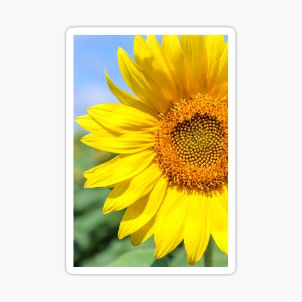 Sunny side up Sticker
