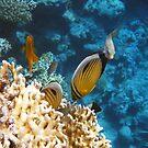 Amazing Red Sea by hurmerinta