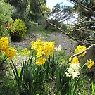 Jonquills with heady perfume showing off. SPRING! 'Arilka'. by Rita Blom