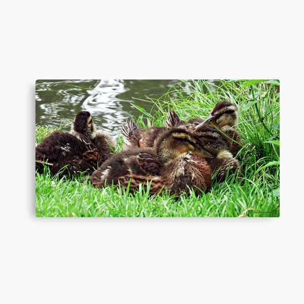 """"""" Snooze Time"""" Canvas Print"""