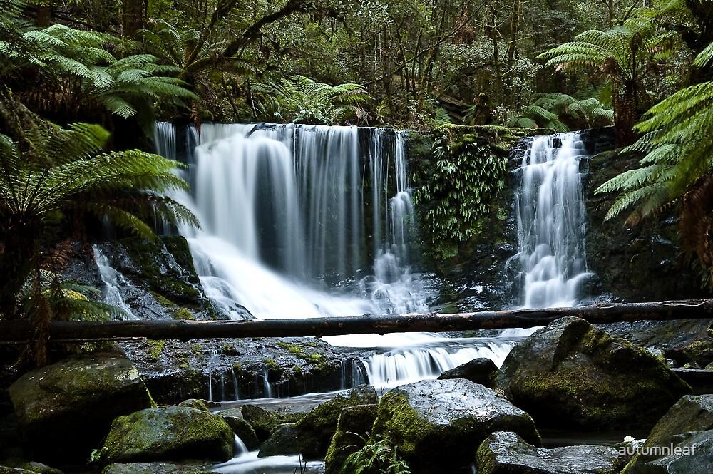 Horseshoe Falls, Mt Field National Park, Tasmania by autumnleaf