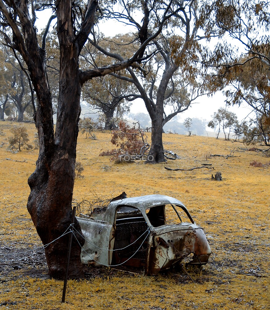 Rust Among The Gumtrees by rossco