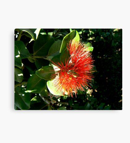 Red, New Zealand Christmas Bush Canvas Print