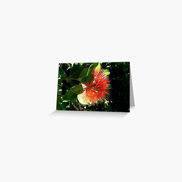 Red, New Zealand Christmas Bush Greeting Card