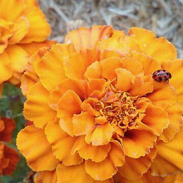 Marigold ladybug by TwoShoes