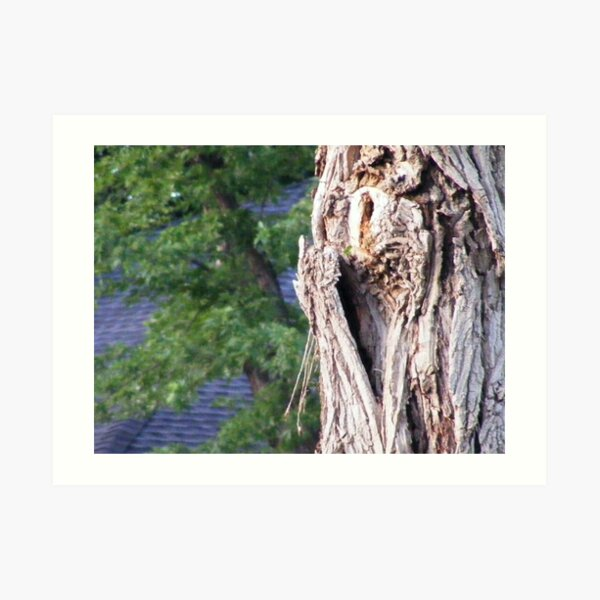 the heart in the tree Art Print