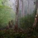 Mystical - Mount Wilson NSW by Philip Johnson