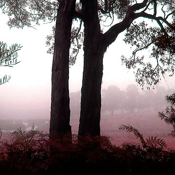 Morning Mist in Gippsland by rozmcq