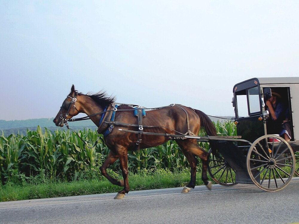 Saturday night in Amish Country by Judi Taylor