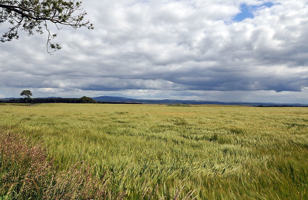 Barley Field Near Kelso by photobymdavey