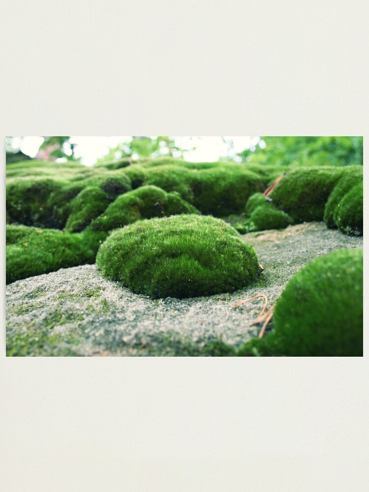 Alternate view of Moss pillow Photographic Print