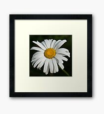 Just a Daisy - Simply Beautiful Framed Print