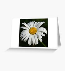 Just a Daisy - Simply Beautiful Greeting Card