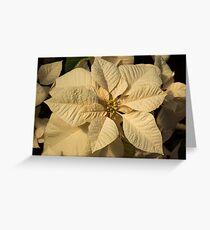 Elegant Ivory Poinsettia - An Exotic Christmas Greeting Greeting Card