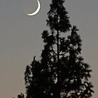 Crescent Moon And Pine by Chet  King