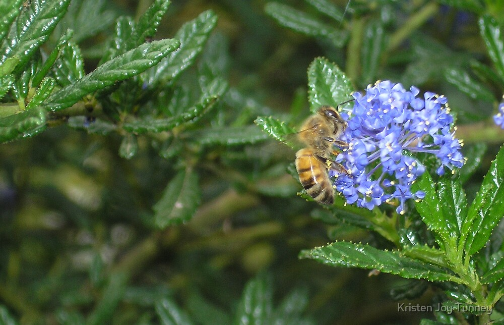 The Bee And The Blue by Kristen Joy Tunney