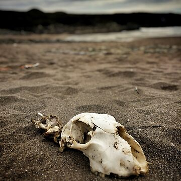 They Said The Beach Was Dangerous by rorycobbe