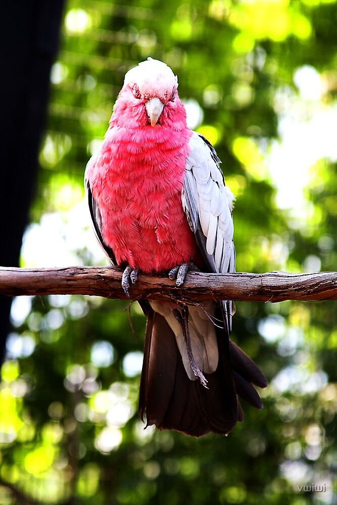 Bird by vwiwi