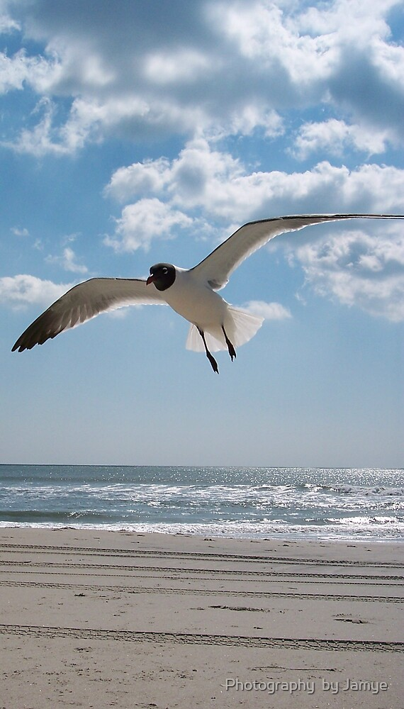 so free by Photography  by Jamye
